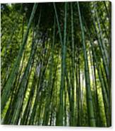Bamboo 01 Canvas Print