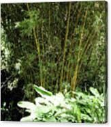 F8 Bamboo Canvas Print