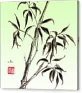 Bamboo Drawing  Canvas Print