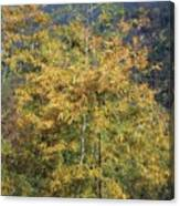 Bamboo Forest In The Fall Canvas Print