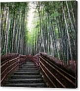 Bamboo Forest Of Japan Canvas Print