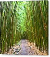 Bamboo Forest Trail Hana Maui 2 Canvas Print