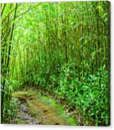Bamboo Forest Trail Canvas Print