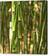 Bamboo Frog Canvas Print