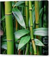 Bamboo Green Canvas Print