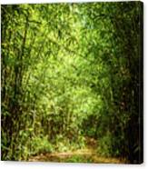 Bamboo Hike Canvas Print