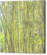 Bamboo In San Diego Zoo Canvas Print