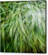 Bamboo In The Wind Canvas Print