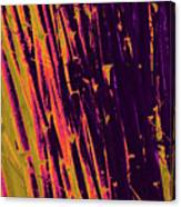 Bamboo Johns Yard 8 Canvas Print