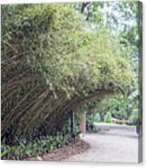 Bamboo Overhang Path  Canvas Print