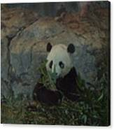 Bamboo Thats For Dinner Canvas Print
