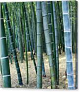 Bamboo Tree Forest, Close Up Canvas Print