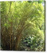 Bamboo Trees In Garden Of Eden Canvas Print