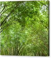 Bamboo Trees In Wangjianglou Park In Chengdu China Canvas Print