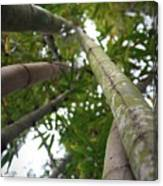 Bamboo View Canvas Print