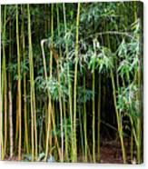 Bamboo Wind Chimes  Waimoku Falls Trail  Hana  Maui Hawaii Canvas Print