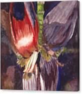 Banana Bloom Canvas Print