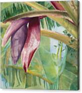 Banana Flower Canvas Print