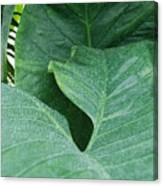 Banana Leaves Canvas Print