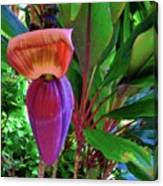 Banana Plant Flower And Leaves Canvas Print