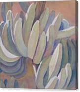 Banana Series 26 Canvas Print