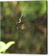 Banana Spider In Web Canvas Print