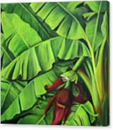 Banana Tree Flower Canvas Print
