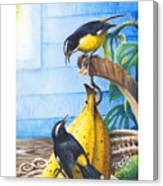 Bananaquits And Bananas Canvas Print