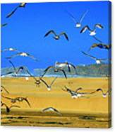Bandon Gulls Canvas Print