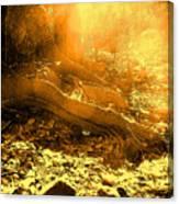 Banishing Rain Forest Shadows Canvas Print