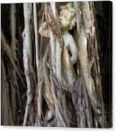 Banyan Grows Over Statue Canvas Print