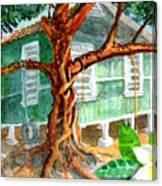 Banyan In The Backyard Canvas Print