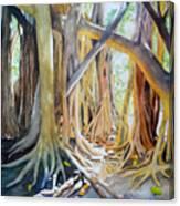 Banyan Shadow And Light Canvas Print