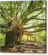 Banyan Star Canvas Print