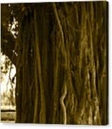 Banyan Surfer - Triptych  Part 1 Of 3 Canvas Print