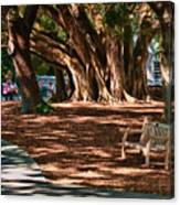 Banyans - Marie Selby Botanical Gardens Canvas Print