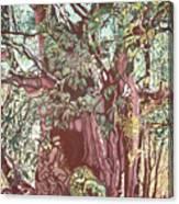 Baoba In Foliage Canvas Print