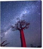 Baobab Milky Way Canvas Print