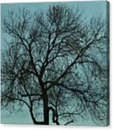 Bare Branches And Storm Clouds Canvas Print