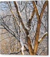 Bare Branches Canvas Print