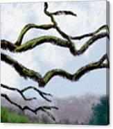 Bare Tree Branches Canvas Print