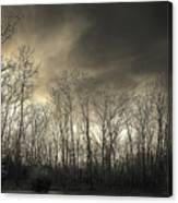 Bare Trees In A Winter Sunset Canvas Print