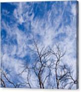 Bare Winter Branches In California Canvas Print