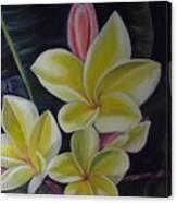 Barely Blushing Canvas Print