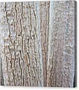 Bark, Moringa Tree Canvas Print
