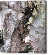 Bark Of The Birch Canvas Print