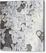 Bark With Heart Canvas Print