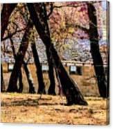 Barn Behind Trees Canvas Print