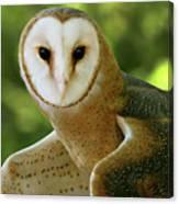 Barn Owl-6553 Canvas Print