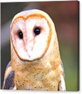 Barn Owl II Canvas Print